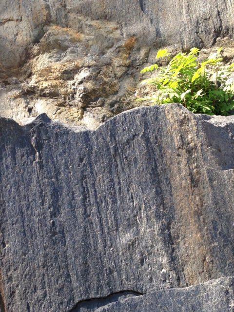 kalliokukassa